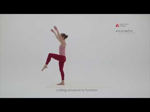 Anatomy Trains in Motion – Dublin, April 2019