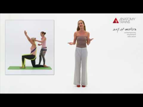 Anatomy Trains in Motion - Karen Gurtner